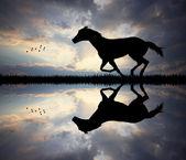 Galopperend paard — Stockfoto