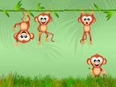 Monkeys in the junglee — Stock Photo