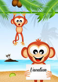 Monkeys on the beach — Stock Photo