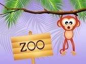 Monkey in the zoo — Стоковое фото