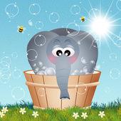 Elefante en la bañera — Foto de Stock