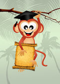 Monkey graduate — Stock Photo