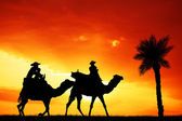 Camel excursion — Stock Photo