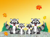 Family of racoons — Stock Photo