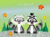 Raccoons in love — Stock Photo