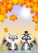 Raccoons in love — Stock Photo