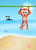 Monkey on the beach — Stock Photo