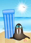Sea lion on vacation — Stock Photo