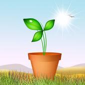 The plant — Stock Photo