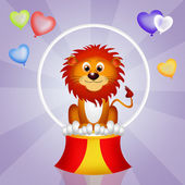 Lion in the circo — Stock Photo