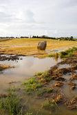Hooi veld — Stockfoto