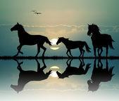 Galloping horses — Стоковое фото