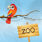 Parrot in the zoo — Stock Photo