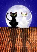 Gatti sul tetto — Foto Stock
