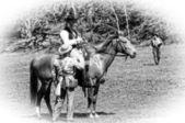 Officer on horse — Stock Photo