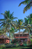 Cottages in a palm grove. Varkala, Kerala, India. — Stock Photo