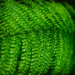 Beautiful leaf of Fern with water drops close-up — Stock Photo #49539649