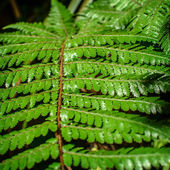 Detail of a beautiful leaf of Fern close-up — Stock Photo
