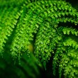 Beautiful leaf of Fern with water drops close-up — Stock Photo #49542221