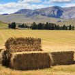 Lanscape with haystacks — Stock Photo