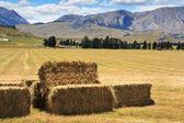 Haystacks ile peyzaj — Stok fotoğraf