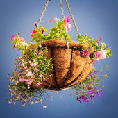 корзина с цветами — Стоковое фото