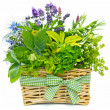 Stock Photo: Basket of herbs