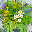 Stock Photo: Fresh herbs and edible flowers