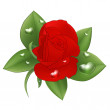 Red rose with drops in the form of heart on a white background. — Stock Vector