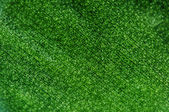 Abstract green background, plant leaf, Macro. Extreme closeup — Stock Photo