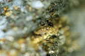 Fantastické zázemí, zlatý kov (velké kolekce) — Stock fotografie