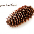 Pinecone — Stock Photo