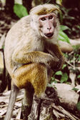Monkey on green forest background — Stock Photo