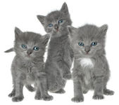 Kittens. — Stock Photo