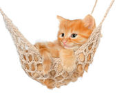 Cute red-haired kitten in hammock — Stock Photo