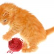 Playful red haired kitten with a ball — Stock Photo #35488741