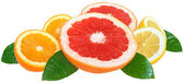 Orange, lemon and grapefruit — Stock Photo