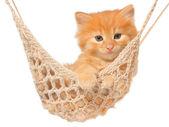 Cute red-haired kitten in hammock. — Stock Photo