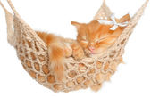 Cute red-haired kitten sleeping — Stock Photo