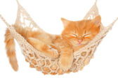 Cute red haired kitten sleeping in hammock — Stock Photo