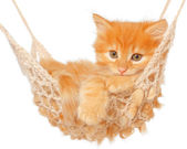 Cute red-haired kitten in hammock — Stock Photo