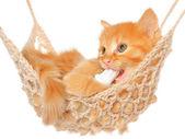 Carino gattino dai capelli rossi in amaca — Foto Stock