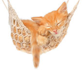 Cute red haired kitten sleeping in hammock — Stockfoto