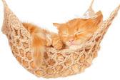 Cute red-haired kitten sleeping in hammock — Stock Photo