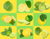 Set of nine lime and lemon on a checkered background. — Stock Photo