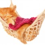 Cute red haired kitten sleeping under blanket in hammock — Stock Photo #48494339