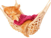Cute red haired kitten sleeping under blanket in hammock — Стоковое фото