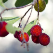 Stock Photo: Fresh berries on abstract green