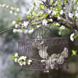 Flowers and birdcage - Stock Photo