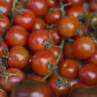 Photo of very fresh tomatoes — Foto de Stock